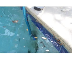 How to remove black algae from your pool for Black spots in the swimming pool