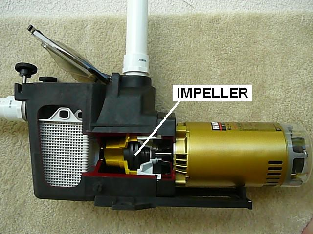 How To Replace A Pool Pump Impeller