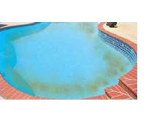 How to get rid of algae in your swimming pool for Using algaecide in swimming pool