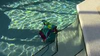 Dolphin Swimming Pool Cleaner