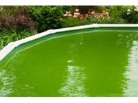 Thecrazypotion Above Ground Pool Green Water Images
